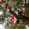 Occupying trees to protests against Mubarak on the regime